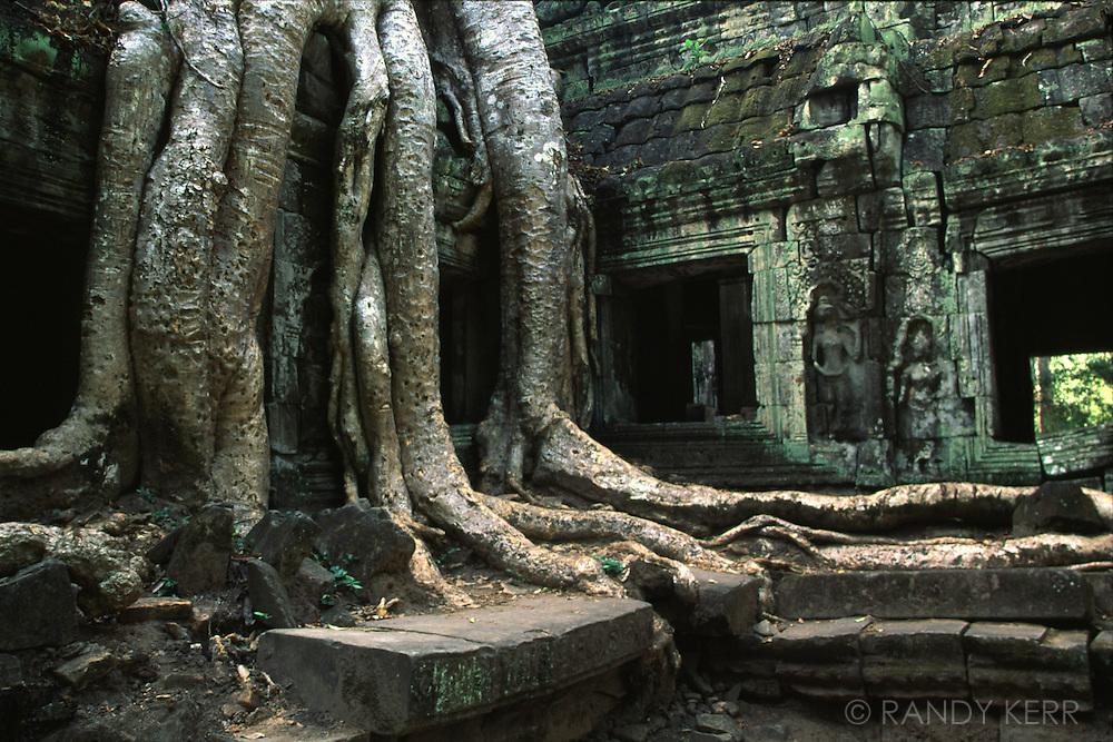 Banyan Tree at Angkor Wat