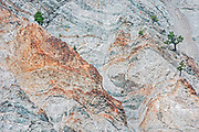 Canyon walls with pine tree, Lytton, British Columbia, Canada