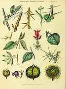 Supports and Armature of Plants from Vol 1 of the book The universal herbal : or botanical, medical and agricultural dictionary : containing an account of all known plants in the world, arranged according to the Linnean system. Specifying the uses to which they are or may be applied By Thomas Green,  Published in 1816 by Nuttall, Fisher & Co. in Liverpool and Printed at the Caxton Press by H. Fisher