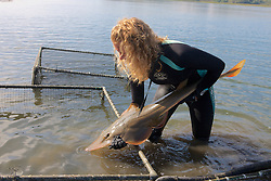 Stephanie Crawford With Shovelnose Guitarfish