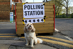 © Licensed to London News Pictures. 06/05/2021. London, UK. A dog sitting next to the polling station sign in Haringey, North London. Polling stations have opened as Londoners vote for the next Mayor of London. Photo credit: Dinendra Haria/LNP