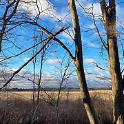Reedy Meadow. Lynnfield, MA is several hundred acres of protected freshwater marsh.