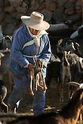 Goats farmer on the road from San Pedro de Atacama to Gautin. Chile, South America