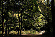"""Forest in The Hague, called """"Het Haagse Bos"""", Netherlands."""