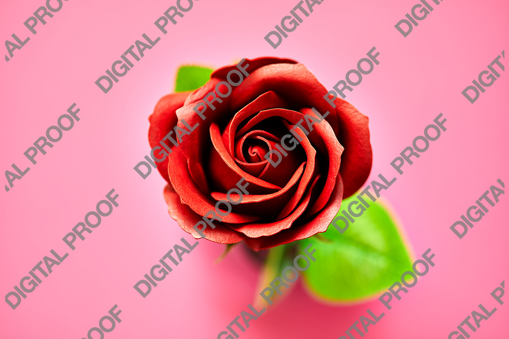 Minimalistic of an artificial red rose image photographed in studio isolated on pink background