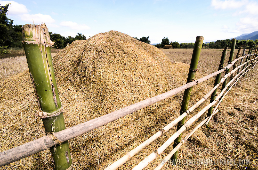A stack of threshed rice storks behind a bamboo fence in rice fields near Site 3 of the Plain of Jars, Laos.