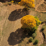 Another fork of Canyon de Chelly in Canyon de Chelly National Monument, Arizona.