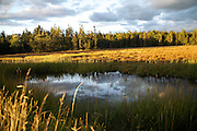 Sunset reflecting in a pond in Acadia National Park, Maine