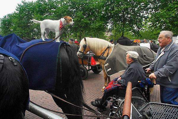 Nederland, Groesbeek, 17-5-2007..Grenslandtocht, een recreatieve rit door de omgeving van Groebeek met paard en wagen,rijtuig, pauzeert op de markt. Een hond staat op de rug van een trekpaard terwijl een man in een rolstoel,voortgeduwd door een vrijwilliger, langskomt..Foto: Flip Franssen/Hollandse Hoogte