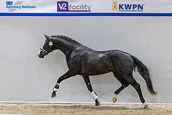 311, Navarro<br /> KWPN Hengstenkeuring 2021<br /> © Hippo Foto - Dirk Caremans<br />  04/02/2021