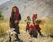 Girls working in wheat field. The traditional life of the Wakhi people, in the Wakhan corridor, amongst the Pamir mountains.