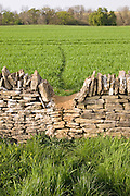 Wildlife badger trail over dry-stone wall, Chedworth, Gloucestershire, United Kingdom.