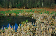 ADD2YF Wetland pond on River Tang, Tangham, Suffolk, England