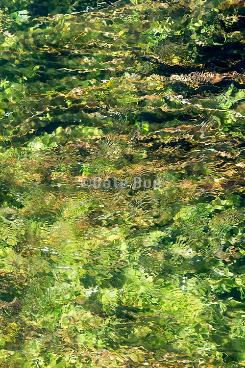 glass like clear clean water stream with green vegetation