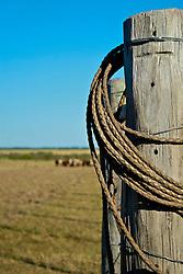 Laço pendurado no moirão que serve para sustentar a cerca de arame. FOTO: Eduardo Rocha/Preview.com