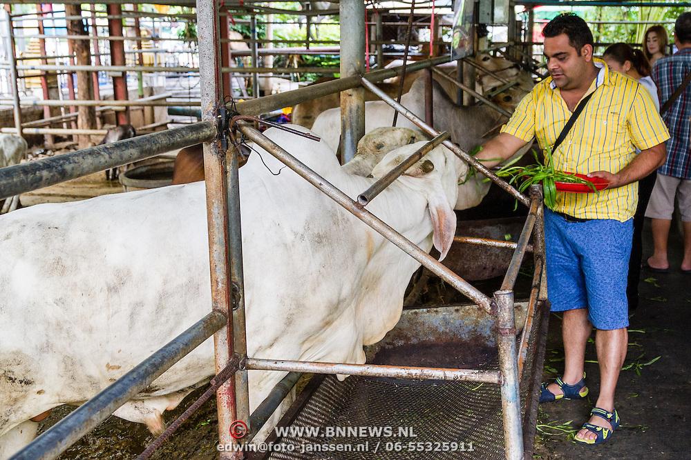THA/Bangkok/201607111 - Vakantie Thailand 2016 Bangkok, Heilige koe in de tempel krijgt offer