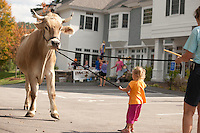 """Three year old Ava Lien finds out """"walking"""" Chip isn't quite as easy as it looked during the 5th annual Heritage Festival  on Saturday afternoon.  Helping to guide Ava is Kathy Salanitro of Ox-K Farm.  (Karen Bobotas/for the Laconia Daily Sun)"""