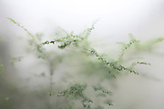 green garden plants seen through frosted glass