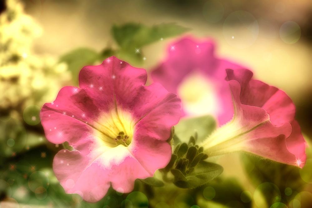 A little pink petal magic from the garden