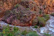 Bright Angel Creek in Grand Canyon National Park, Arizona, USA