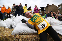 © Licensed to London News Pictures. 28/03/2016. Gawthorpe, UK. An exhausted competitors throws down his 50kg bag of coal at the finish of the 2016 World Coal Carrying Championships. The championships are held annually on Easter Monday in the small West Yorkshire town of Gawthorpe. The competition is a race which involves carrying a 50kg bag of coal up a steep incline to the finish line. Photo credit : Ian Hinchliffe/LNP