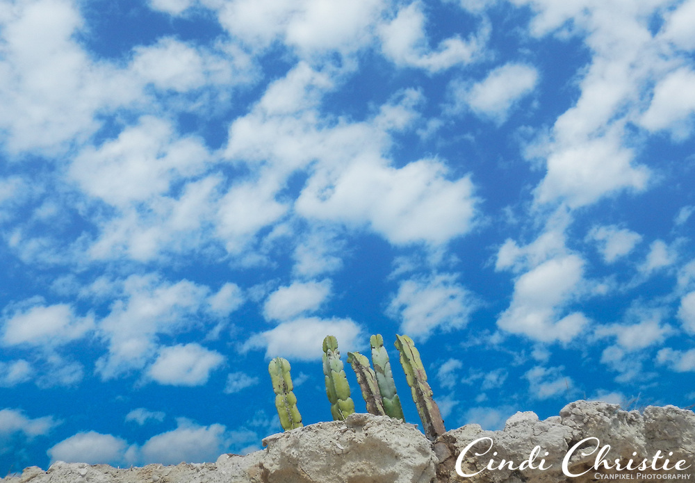 Puffy white clouds form a backdrop for cacti growing on Isla Carmen on Wednesday, Oct. 28, 2015, in Loreto, Mexico.  (© 2015 Cindi Christie/Cyanpixel)