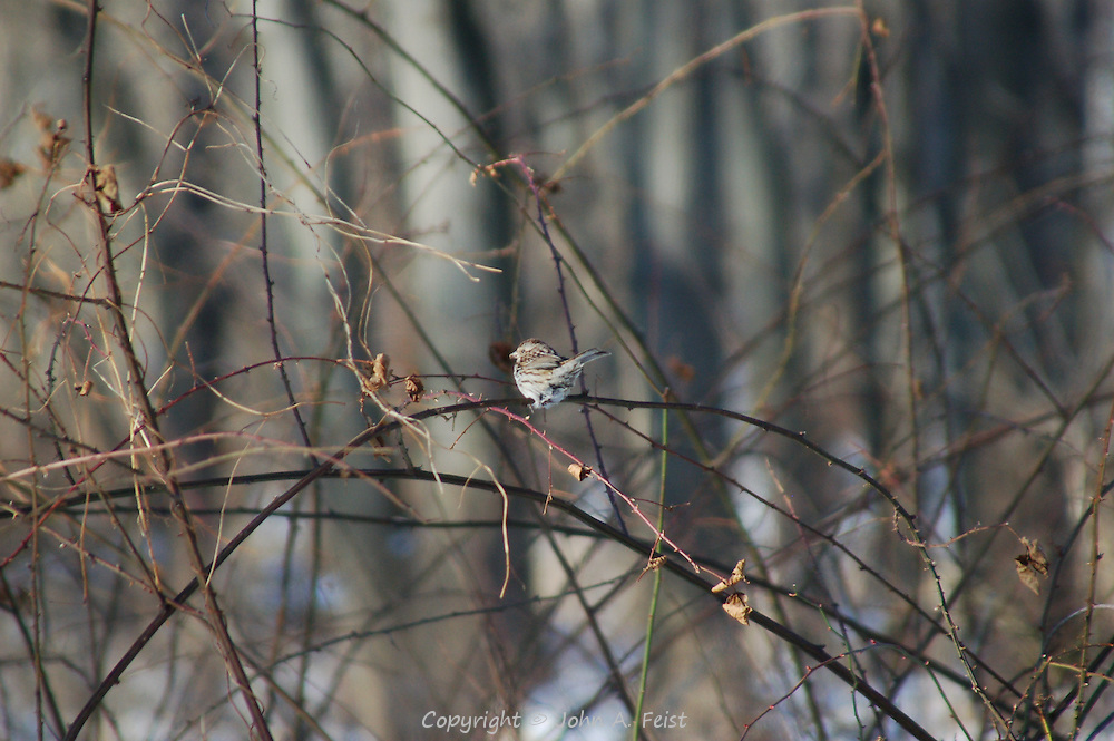 A lonely sparrow sitting in the sun along the D and R Canal in Hillsborough, NJ