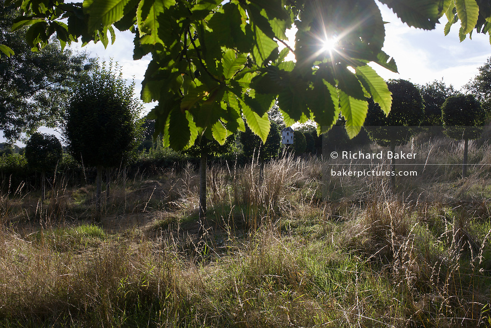Hornbeam trees and distant dovecote in a Herefordshire garden orchard.