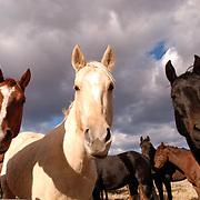 Horses in the Bridger Mountains, Montana.