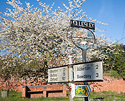 Spring blossom on trees and road sign in the village of Hollesley, Suffolk, England