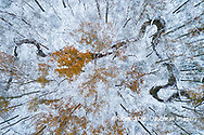 63877-00808 Trees with a dusting of snow aerial view Marion Co. IL