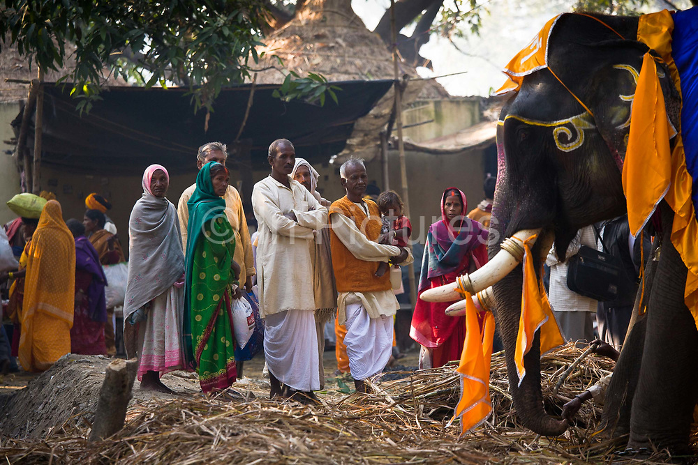 Pilgrims look with curiosity and respect at the elephants on show at the Sonepur animal fair India's largest yearly cattle fair, near Patna, Bihar, India.