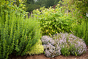 Herbs flowers to attract beneficial insects.