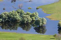 Flooded trees: mainly white willow (Salix alba). Livansko Polje -  karst plateau.: arguably the largest karst field in the world. Ramsar site. May 2009. Bosnia-Herzegovina.<br /> Elio della Ferrera / Wild Wonders of Europe