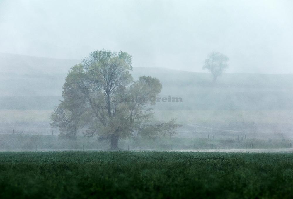 Misty morning tree, Pennsylvania, USA