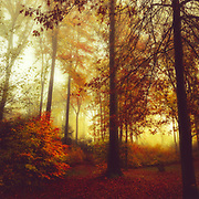 Forest clearing on a misty November morning<br /> Redbubble products--> http://bit.ly/FallForestColours_RB