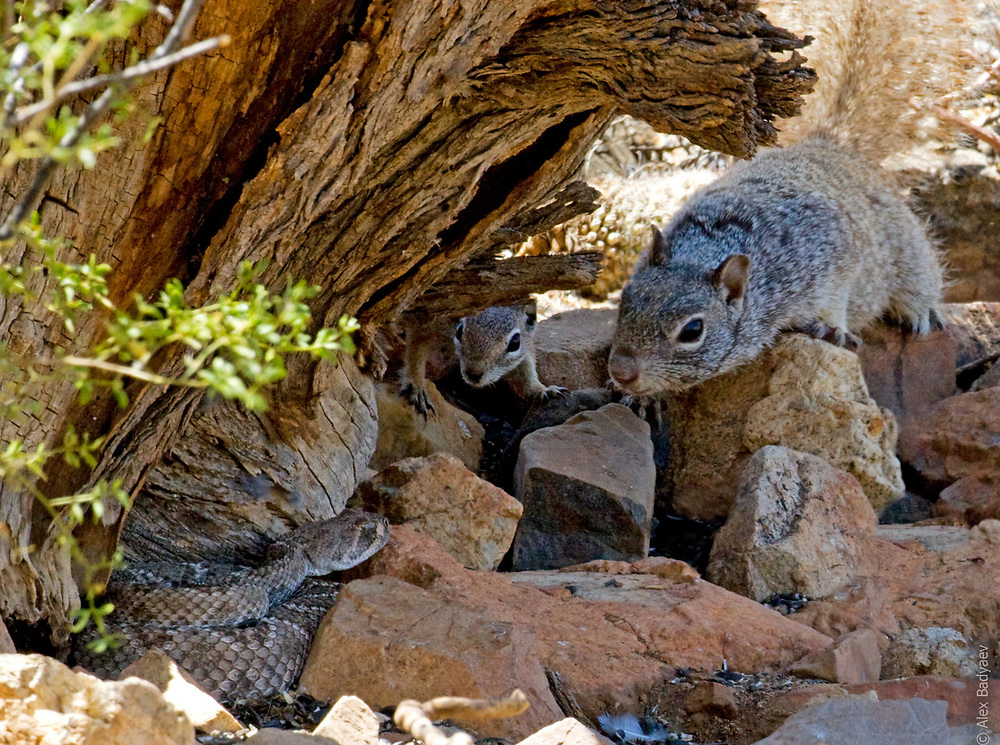 """THE LOCAL WELCOMING COMMITTEE 