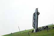 Cows grazing beneath shadow cast by white stretched limousine buried in a upright position. Sauk Centre Minnesota MN USA