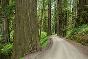 One of the first stops we made was to the Jebediah Smith park, where some of the tallest Redwoods live.