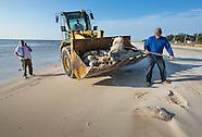 Mississippi Beach Fish Kill