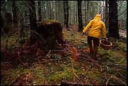 Oregon Mushrooms