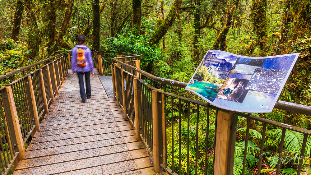 Interpretive trail at The Chasm, Fiordland National Park, South Island, New Zealand