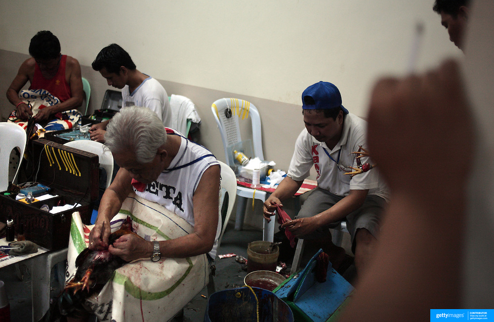 """THE PHILIPPINES (Manila). 2009. """"Cock doctors' clean and stitch up the wounded and injured winning birds who survive the fight to the death of two game cocks, each with three inch razor sharp blades fastened to their left ankles at the Makati, Makati City, Manila. Photo Tim Clayton <br /> <br /> Cockfighting, or Sabong as it is know in the Philippines is big business, a multi billion dollar industry, overshadowing Basketball as the number one sport in the country. It is estimated over 5 million Roosters will fight in the smalltime pits and full-blown arenas in a calendar year. TV stations are devoted to the sport where fights can be seen every night of the week while The Philippine economy benefits by more than $1 billion a year from breeding farms employment, selling feed and drugs and of course betting on the fights...As one of the worlds oldest spectator sports dating back 6000 years in Persia (now Iran) and first mentioned in fourth century Greek Texts. It is still practiced in many countries today, particularly in south and Central America and parts of Asia. Cockfighting is now illegal in the USA after Louisiana becoming the final state to outlaw cockfighting in August this year. This has led to an influx of American breeders into the Philippines with these breeders supplying most of the best fighting cocks, with prices for quality blood lines selling from PHP 8000 pesos (US $160) to as high as PHP 120,000 Pesos (US $2400).."""