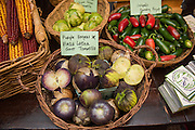 TOMATILLO, Physalis philadelphica Showcase: 'Purple Keepers' x 'Plaza Latina Giant'<br />