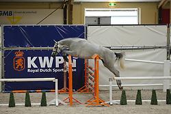 102 - Guduela<br /> Vrijspringen 3 jarige Merries<br /> KWPN Paardendagen - Ermelo 2014<br /> © Dirk Caremans