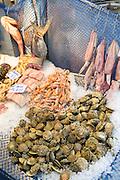 Fresh fish calamari, seafood crustaceans in fishmonger in food market in Kadikoy district, Asian side of Istanbul, East Turkey