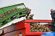 Nederland, Bemmel, 5-9-2014Loonbedrijf bezig met suikerbietencampagne. De grote en moderne rooimachine kost E 600.000 en haalt de bieten uit de grond, snijdt het loof eraf en bewaart het in zijn laadbak tot deze vol is en ze in de aanhanger van een trekker overgeladen worden. Foto: Flip Franssen/Hollandse Hoogte