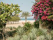 Colorful vegetation at the Anantara Al Yamm Villa Resort in the Sir Bani Yas Island.