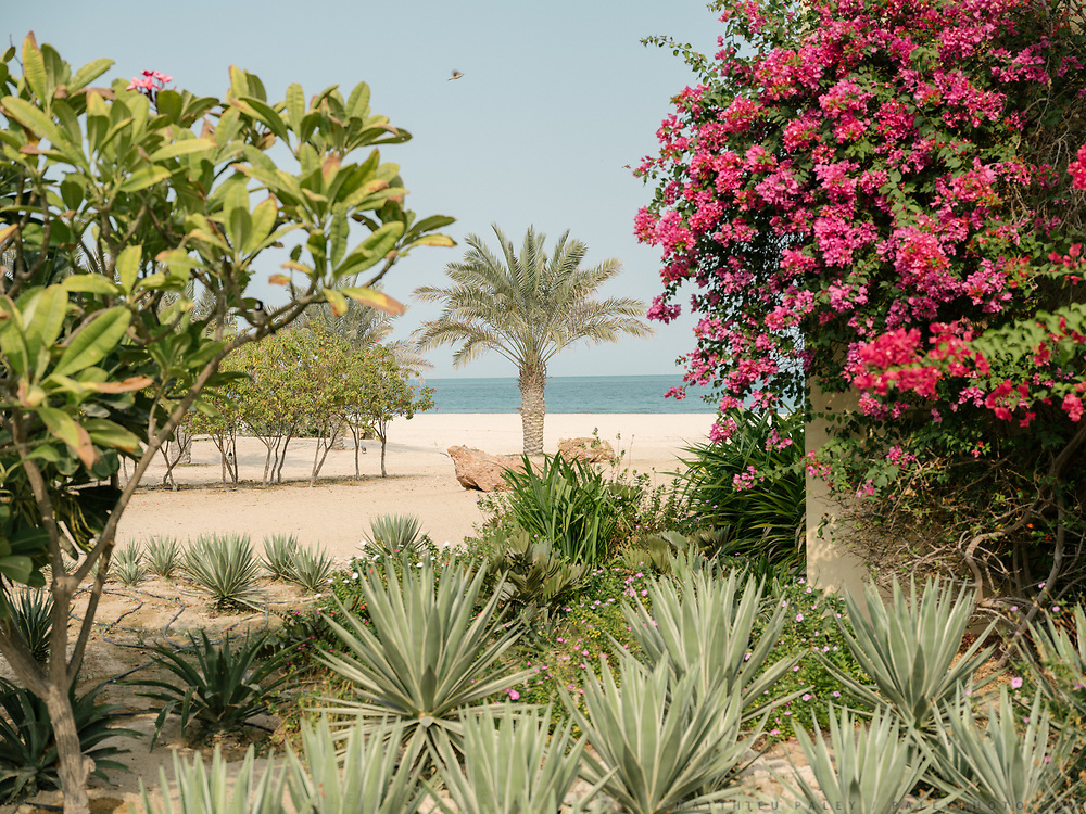 Colorful vegetation at the Anantara Al Yamm Villa Resort in the Sir Bani Yas Island.