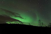 View of a tree and hillside silhouetted against the Northern Lights (Aurora Borealis), on the road northeast of Seljelvenes, near Baksfjord, in the Troms region of northern Norway.